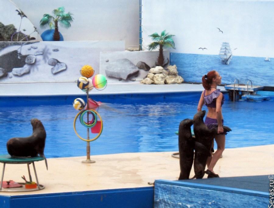 фото севастополь дельфинарий